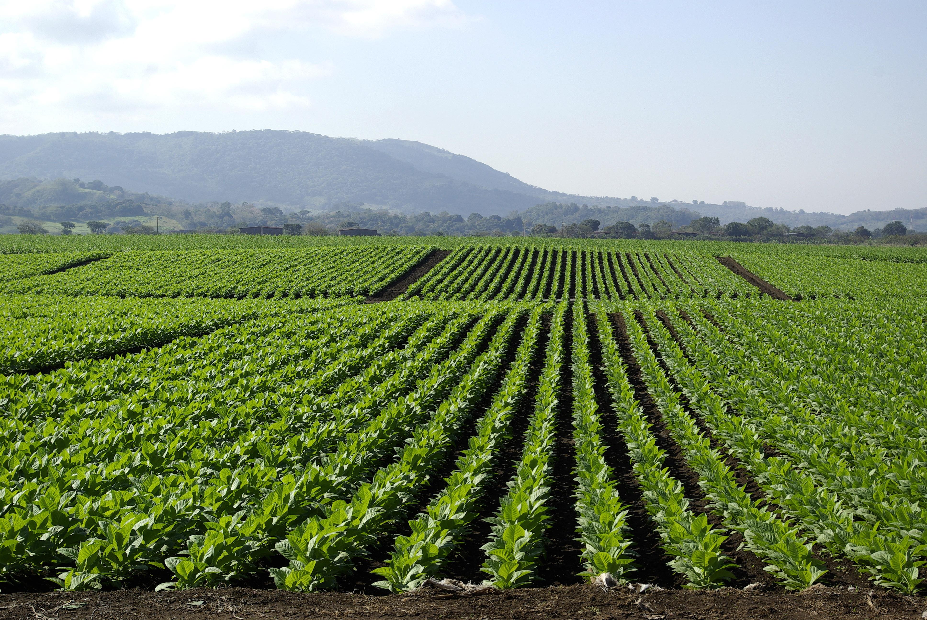valoraciones agricolas y forestales tasaciones